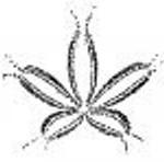 Image Ortho-Bionomy_1